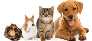 L'actualité de nos amis les bêtes
